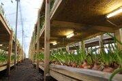 Тепличный комплекс для выращивания цветов и др.культуры - Фото 1