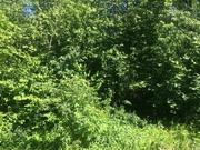 Продается лесной участок 25 соток ИЖС в д. Перхурово, Земельные участки Перхурово, Чеховский район, ID объекта - 201433124 - Фото 2