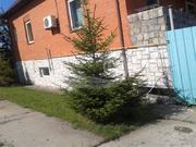Продается дом, площадь: 329.30 кв.м, площадь строения: 329.30 кв.м, . - Фото 4