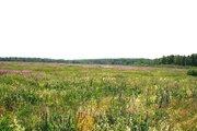 Продаю участок сельхозназначения дешево 4,5 га 98 км по Щелковскому ш - Фото 5