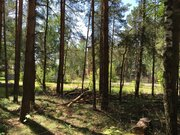 Лесной участок 12 соток ИЖС - Фото 1