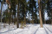 Участок 12 соток с лесными деревьями в Жаворонках - Фото 1