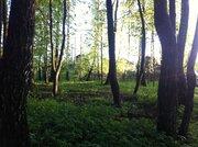 Участок 8 сот в Чеховском районе , с. Талеж, с лесными деревьями. - Фото 3