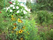 Земельный участок в Лосино-Петровском - Фото 2