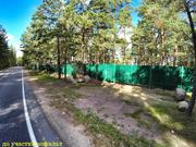 21 сотка соснового леса в 500 метрах от Финского залива. - Фото 4