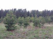 8 соток рядом с лесом - Фото 1