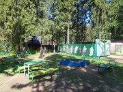Стародачный участок с лесными деревьями 35 соток недалеко от Москвы