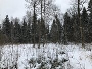 Лесной участок 20 соток в пжкиз Назарьево - Фото 2