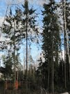 2 750 000 Руб., Зеленая роща. 12 (24) соток. 35 от МКАД., Земельные участки в Голицыно, ID объекта - 201101056 - Фото 5