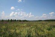 Продаю участок сельхозназначения дешево 4,5 га 98 км по Щелковскому ш - Фото 3