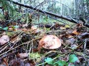 Продается участок в Горетов 30 сот. с выходом в лес. - Фото 4