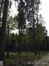 Лесной Земельный участок 10 сот по Рогачевскому шоссе, дер Поповка - Фото 4