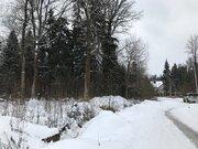 Лесной участок 20 соток в пжкиз Назарьево - Фото 4