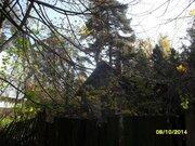 Участок с лесными деревьями в старо-дачном месте, крайний к лесу - Фото 1
