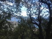 Продается ровный видовой участок в Гурзуфе у подножья Ай-Даниль. - Фото 4