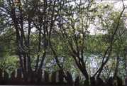 Продажа участка, Чернавино, Волховский район - Фото 4