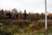 Прилесной участок в СНТ, окруженном с четырех сторон грибным лесом - Фото 1