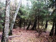 Продается участок в Горетов 30 сот. с выходом в лес. - Фото 5