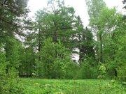 Лесной участок в стародачном месте - Фото 3