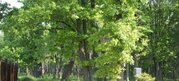 Лесной участок с выходом в лес 20 соток. Москва. - Фото 4