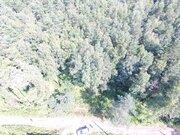 Лесной участок 15 соток д. Осеченки ИЖС - Фото 3