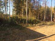 Лесной участок 8 соток ИЖС - Фото 2