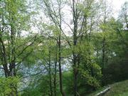 18 соток на берегу Москвы-реки с лесными деревьями - Фото 3