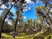 21 сотка соснового леса в 500 метрах от Финского залива. - Фото 1