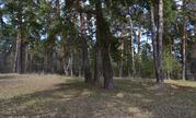 Лесной участок на высоком берегу р. Ока д. Лужки, Симферопольское шосс - Фото 2