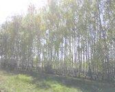 С. Константиново Клепиковского р. - Фото 2