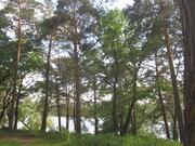 Живописный лесной земельный участок на 1-ой линии реки Ока, д. Лужки - Фото 2