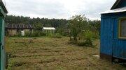 Участок в сосновом лесу с небольшим домиком 50 км от МКАД - Фото 3