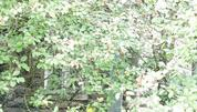 Участок 25 сот. с домом д.Кулебякино, Сергиево-Посадский р-нр-н - Фото 4