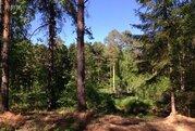 Участок 40 сот, в Сосновом лесу, на участке сосны, газ, р.Волга 700 м - Фото 1