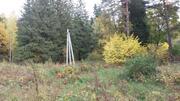 Продаётся лесной участок 44 сотки Солнечногорский район д.Николаевка - Фото 4