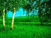 Продам земельный участок к берёзовой роще