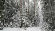 Участок в деревне Акулово