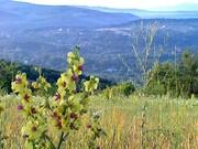 Лесных угодий в предгорьях Северского района - Фото 3