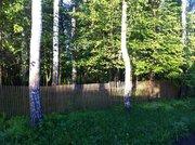 Участок 8 сот в Чеховском районе , с. Талеж, с лесными деревьями. - Фото 1