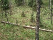 40 гектаров. Волоколамский район. Кругом лес. - Фото 3
