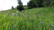 Любителям лесных просторов, грибов, земляники и речки! - Фото 4