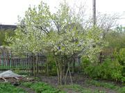 Продается участок в г.Гатчина в сад-ве вниистроммаш (Промзона 1) - Фото 4