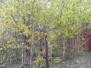 Земельный участок 8 соток, свет, газ, д. Мещерское Чеховский район - Фото 5