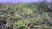 Участок со всеми коммуникациями 30 соток на берегу Оки - Фото 5