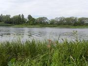 Шикарное место 3 га рекреационной земли (сосновый бор), на реке Волга