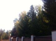 Участок 25 соток кп Лесной Ручей Чеховский район - Фото 2