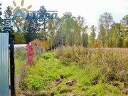 Продается березовая роща 35 кв. метров в жуковском районе - Фото 5