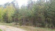 Продам лесной участок 10 соток всего 50 км от МКАД по Горьковскому ш. - Фото 3