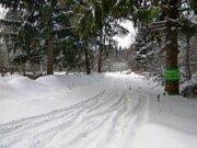 Лесной участок в д. Садки - Фото 4
