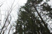 Лсеной участок в стародачном посёлке на Рублёвке по разумной цене - Фото 3